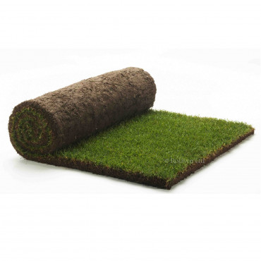 Medallion Turf 1m2 Rolls (Minimum 10 Rolls)